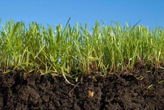 Основные ошибки при посеве газона