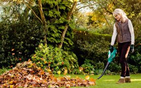 Летние работы в саду: полезные советы дачникам