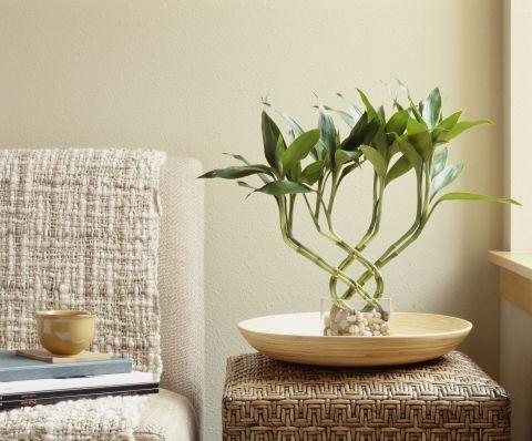 10 лучших комнатных растений для городских квартир