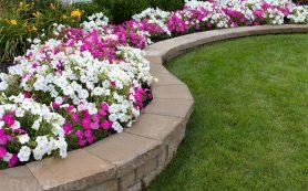 Цветочные бордюры: какие растения выбрать и варианты оформления