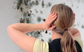 Борьба с плесенью: традиционные методы vs народные