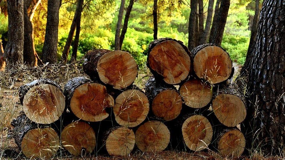 Кому положен бесплатный лес на жильё и дрова?