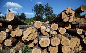 Брусовый материал: треть школ и детсадов предлагают строить из дерева