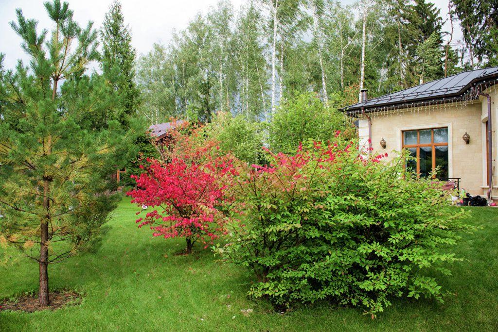 Садовый промах: как не допустить смертельной схватки цветов у себя на даче