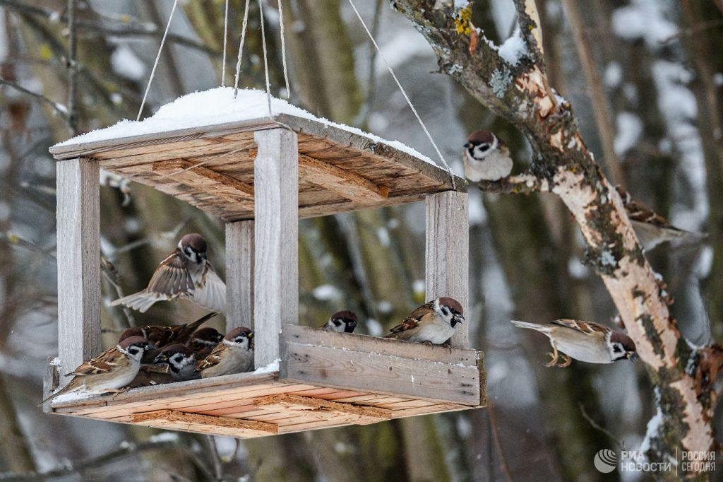 Домик для зерна и сала: как сделать кормушку для птиц своими руками