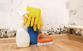 7 способов избавиться от сырости в квартире