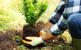 Советы при посадке деревьев и кустарников