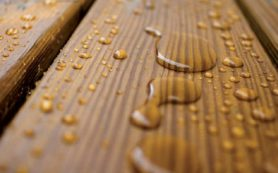 Защита древесины от вредителей