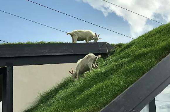 Как сделать травяную крышу в частном доме
