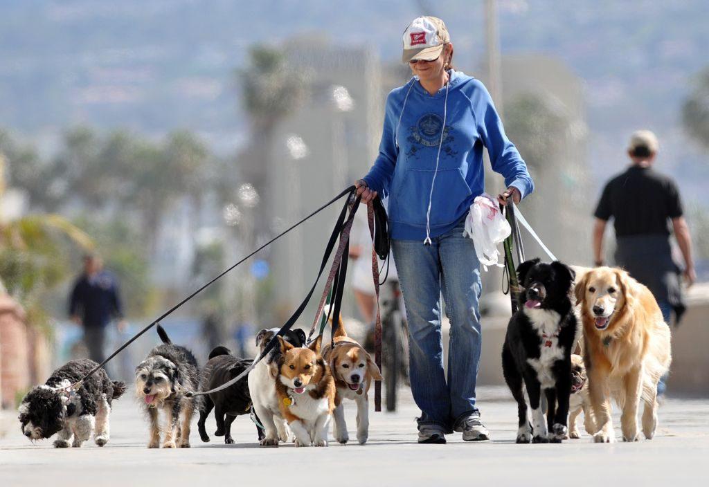 Правильный выгул собаки