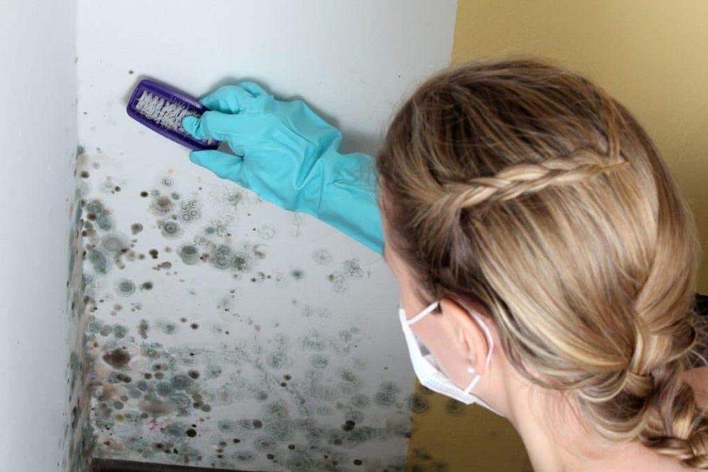 Как бороться с плесенью в помещении квартиры
