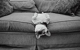 Выбираем диван в дом, в котором обитают домашние животные